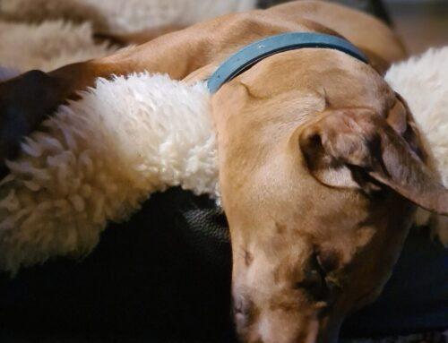 Træthed – Søvnproblemer