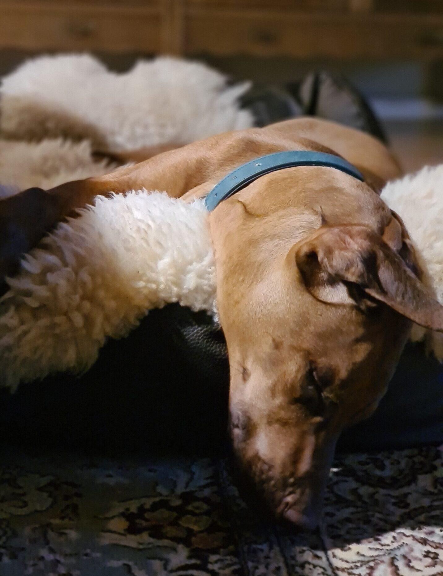 Træthed-søvnproblemer? Få det bedre med Biodynamisk Kranio-Sakral Terapi v/ Lis Hauge, 40199714